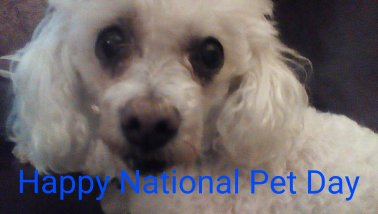 Peanut - National Pet Day