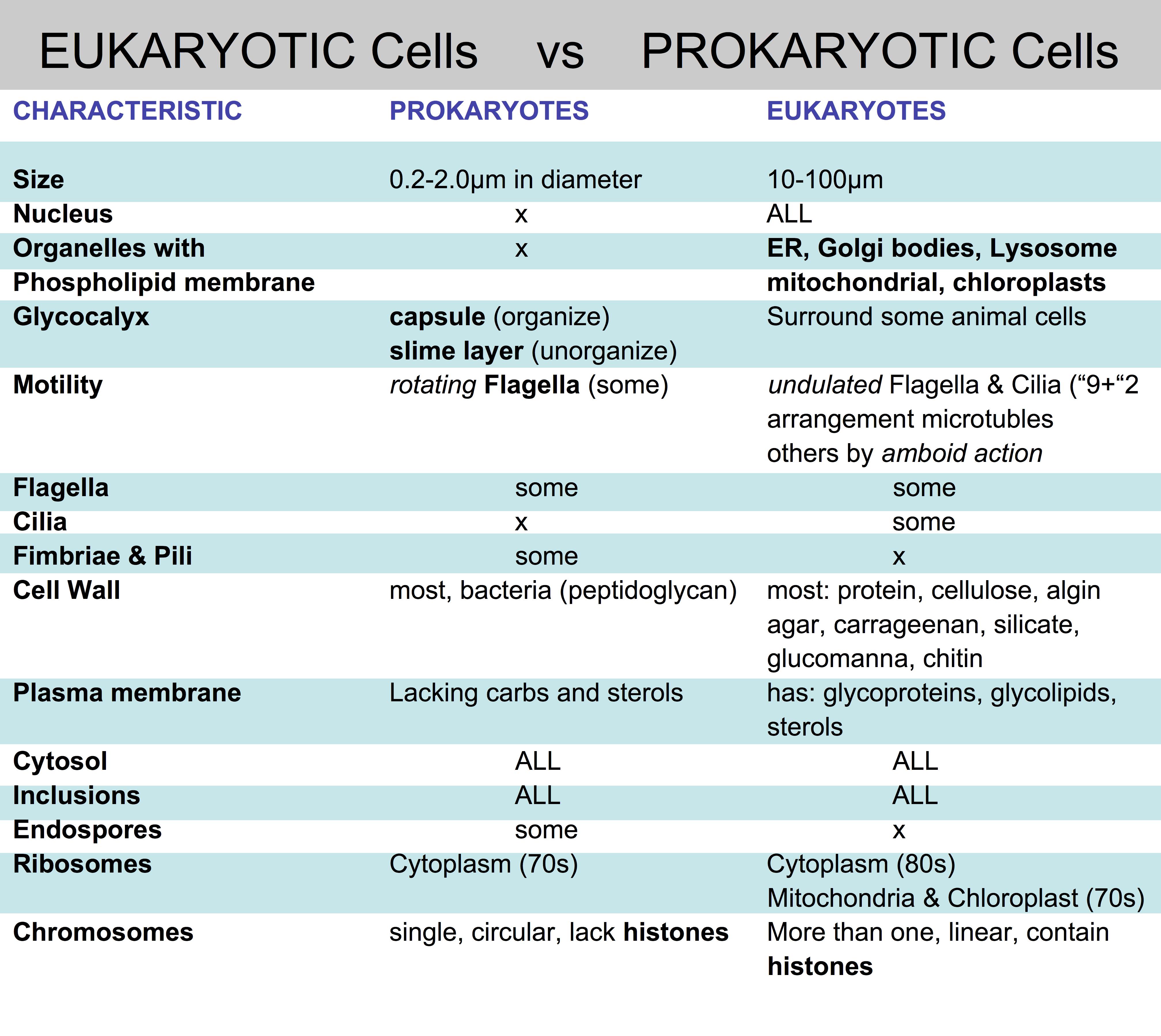 Worksheets Prokaryotes Vs Eukaryotes Worksheet prokaryotic and eukaryotic cells worksheet free worksheets library cell types prok ryotes v euk pl nt nim l michelleburden