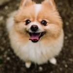 Ellie & Indy: Puppy Play Date
