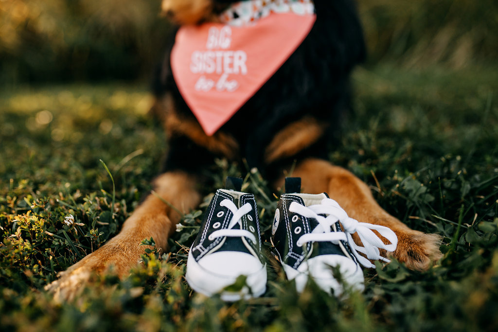 Hobbs-Pregnancy-Announcement-Baby-Pregnant-Dog-Michelle-Christine-Photography-5