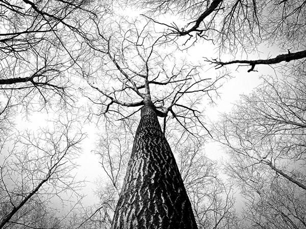 tall-tree_stark-600