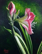 Light of the world #2 red and white amaryllis acrylic painting by Michelle east