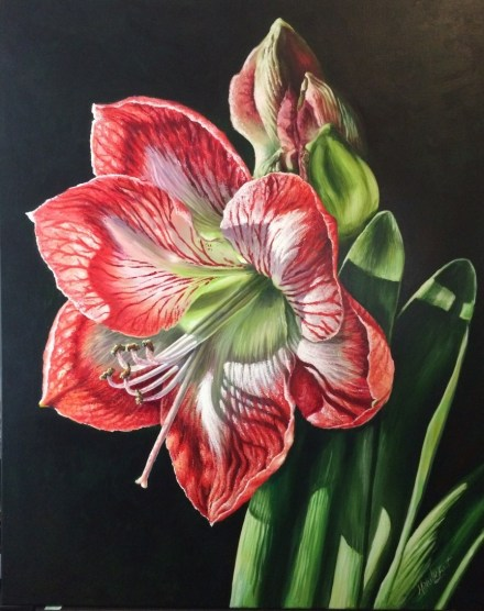 Light of the world res and white amaryillis acrylic painting by Michelle east