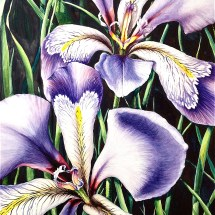 Louisiana Irises watercolor painting by Michelle East