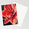 Amaryllis Sunlight NOTE CARDS