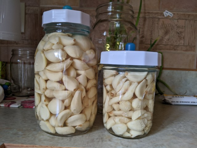 mason jars of garlic