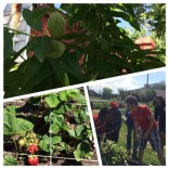 The community garden is an amazing way for anyone in the area to have an affordable way to grow fresh fruits and vegetables.