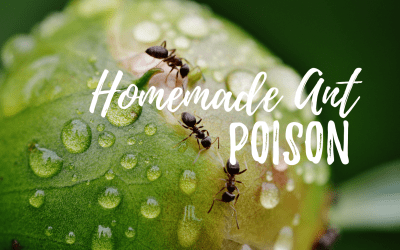 Borax ant poison to fix that pesky problem in your home