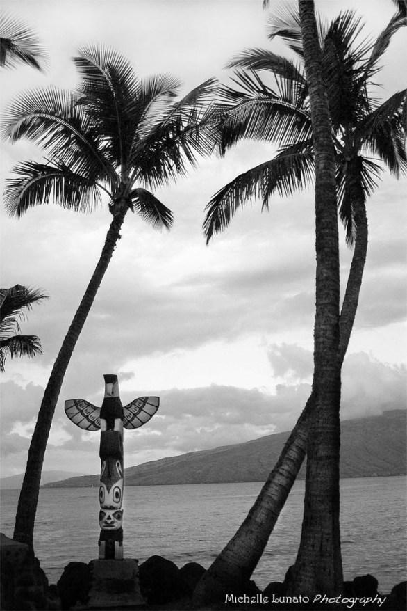 MM~palm_tree_sunset