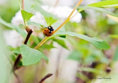 L for ladybug