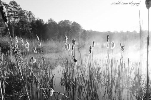 MM3-2 MLunato Photography