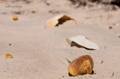 The wind seemed to be pushing the sand away from the shells, creating interesting lines in the sand.