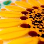 Sunflower Coaster Closeup