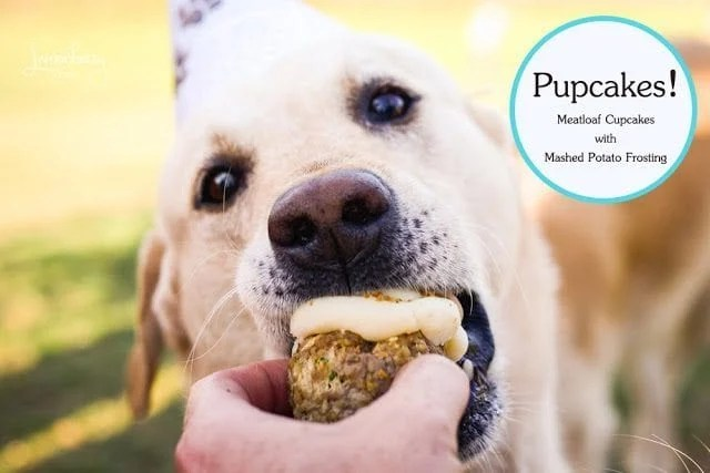 Pupcakes Meatloaf Cupcakes for Furry Friends | Recipe