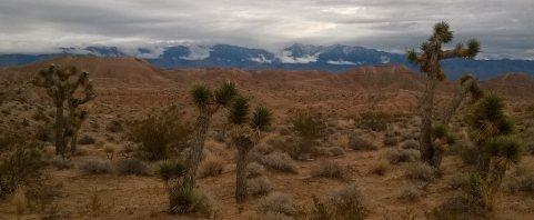 joshua-trees-mesquite-nv