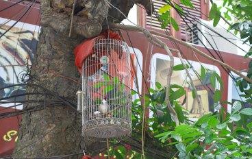 birds near a wire small