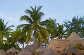palapas and palms