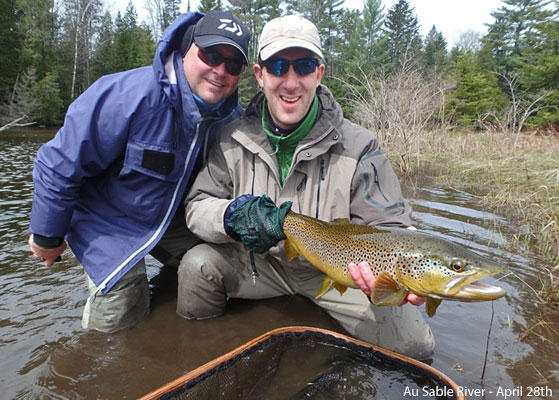 Springtime Brown Trout on the Au Sable