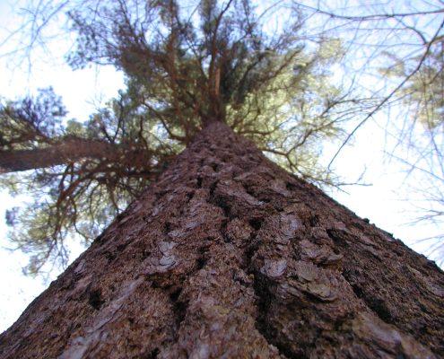 Hartwick Pines State Park