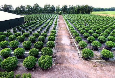 ReLeaf Center cultivation in Niles