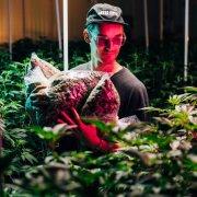 DJ GRiZ with Astro Hippie Cannabis