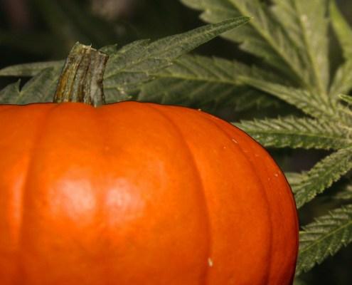 2021 Michigan Marijuana Halloween Guide