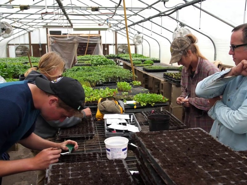 How Some Cooperatives Are Helping Farmers to Manage Produce Safety