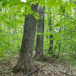 Kamen Forest Management