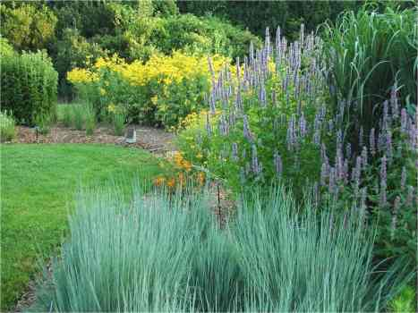Transforming Lawns with Native Plants4 - MHL Magazine