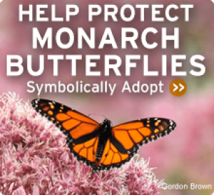Adoption-MonarchButterfly-220x200