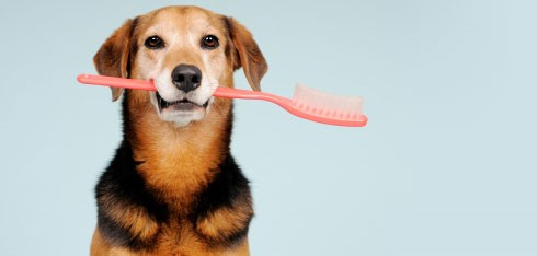 Celebrate National Pet Oral Care Month