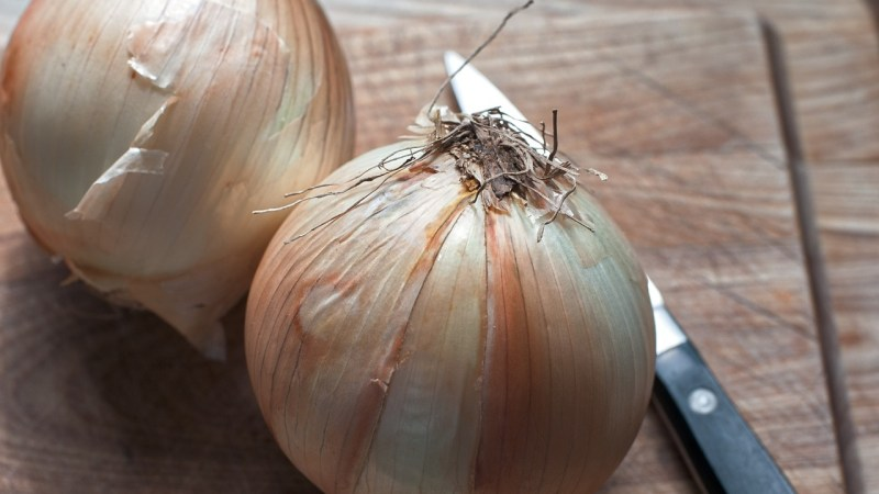 Celebrity Chef Kevin Gillespie Shares Cooking Ideas and Tips with Vidalia Onions to Kick Off Grilling Season {Interview}