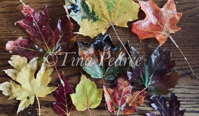 Our Homeschool Fall Leaves Project Using Beeswax