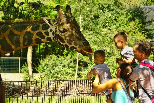 The DETROIT ZOO is Looking for YOU to Become a Volunteer!