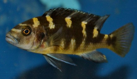 2014-10-25-fish-1-003