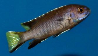 2014-10-25-fish-1-007