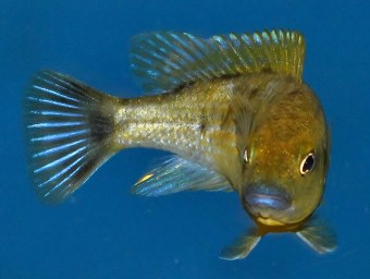 2014-10-25-fish-1-014