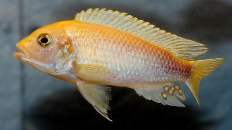 2014-10-25-fish-1-017