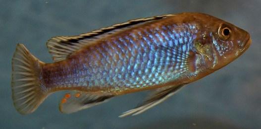 2014-10-25-fish-1-019