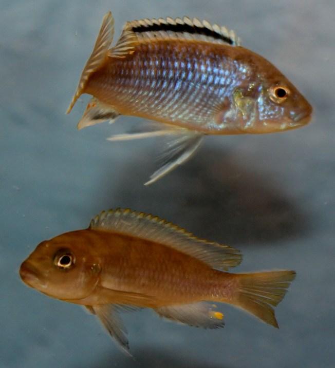 2014-10-25-fish-1-020