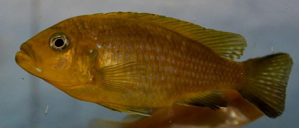 2014-10-25-fish-1-024