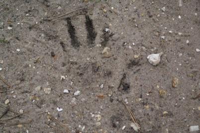 badger-spore