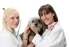 Perro atendido por veterinarios