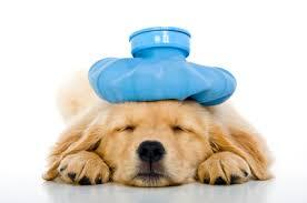 Seguros veterinarios para perros