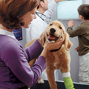 Seguro veterinario