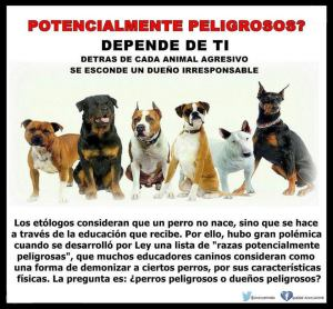 Seguros perros peligrosos