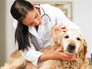 seguro de perro