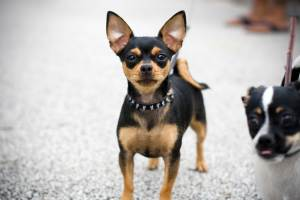 imagen:all-puppies.com
