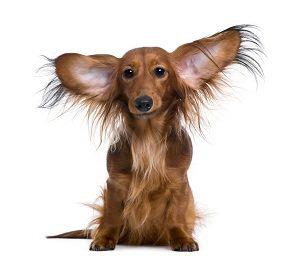 Imagen: Perros del alma