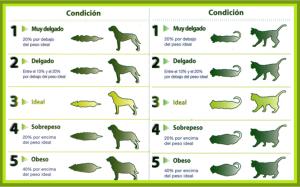 Imagen: Centro Veterinario Mascots